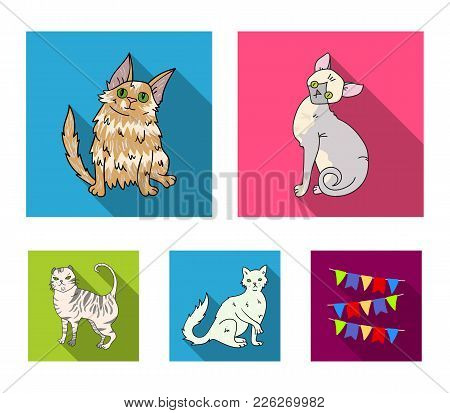 Turkish Angora, British Longhair And Other Species. Cat Breeds Set Collection Icons In Flat Style Ve