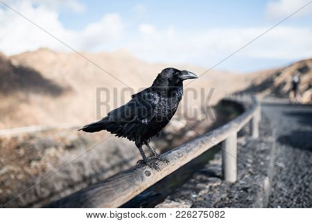 Close-up Of Raven On Wooden Fence With Mountains In Blurred Background