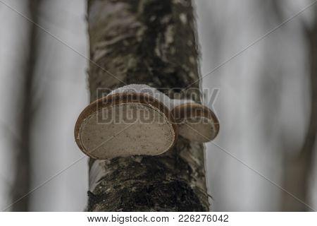 Wet Polypore Mushroom In Winter Cold Dark Day