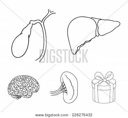 Liver, Gallbladder, Kidney, Brain. Human Organs Set Collection Icons In Outline Style Vector Symbol