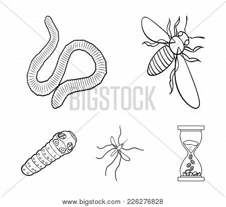 Arthropods Insect Mosquito, Bee.earth Worm, Caterpillar, Vermicular Set Collection Icons In Outline