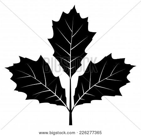 Vector Oak Twig Isolated On White Background