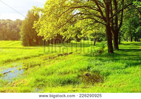 Spring Landscape In Sunny Weather. Green Spring Trees And Flooded Spring Lawn In The Park In Sunligh