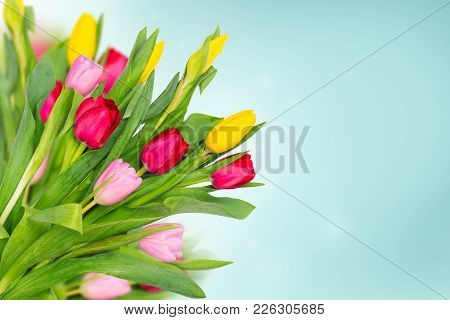 Spring Flowers Tulips On Blue Background. Spring Banner With Bunch Of Flowers. Copy Space