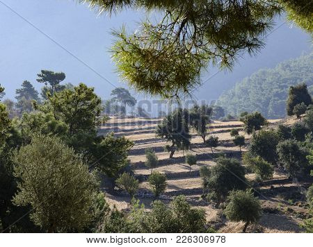 Lycian Trail In Turkey, In This Revenge The Road Passes Along The Fields Located In The