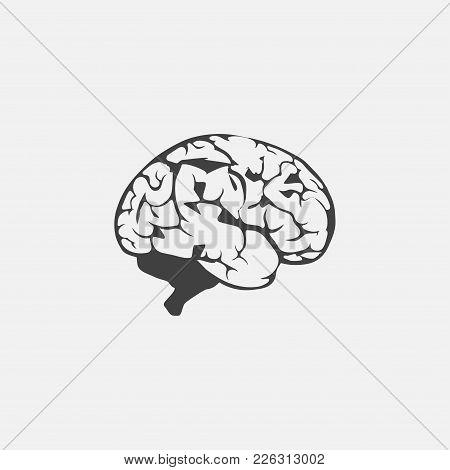 Brain Icon Vector Illustration. Organ Icon Vector
