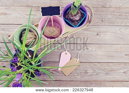 Spring Flowers In Pots, Preparing The Garden For The Spring Season. Pots, Bulbs On Wooden Background