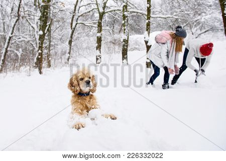 Dog And People Having Fun In Winter Forest With Snow. Cocker Spaniel Making Snowman.