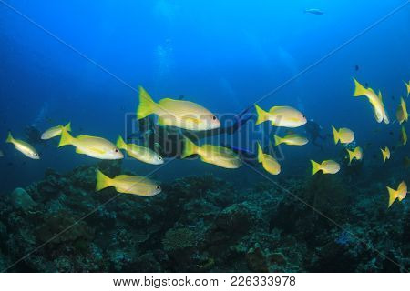 Fish,reef and scuba diver