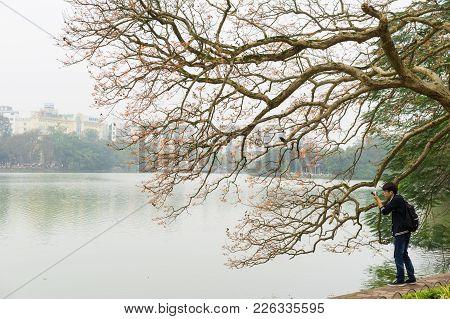 Hanoi, Vietnam - Mar 15, 2015: Young Man Takes Photo Of Tree Bud At Hoan Kiem Lake In Hanoi Capital