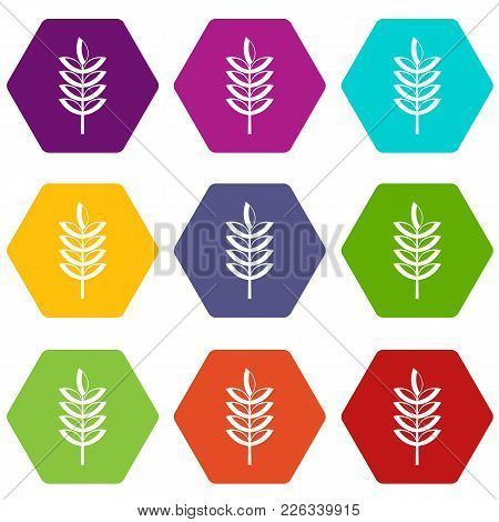 Rye Spica Icon Set Many Color Hexahedron Isolated On White Vector Illustration