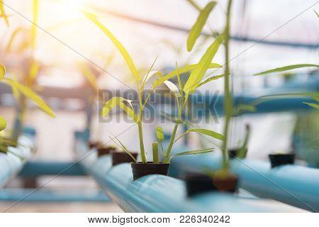 Vegetables Hydroponics Farming In Farmland Background. Organic Food And Healthy Concept. New Technol
