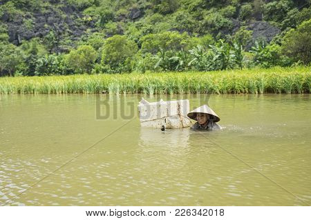 Ninh Binh, Vietnam - May 16, 2015: Vietnamese Woman Catches Freshwater Shellfish On River In Tam Coc