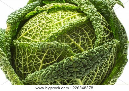 Savoy Cabbage Close-up Isolated On White Background One Fresh Green Head