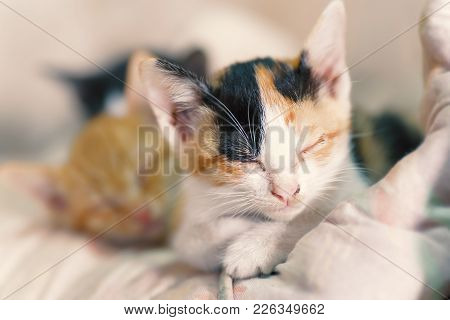 Cute Kittens Are Sleeping Together, Pet In Home