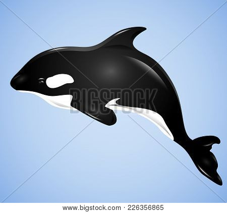 3d Illustration With Grampus On A Blue Background. Vector Killer Whale For Your Design.
