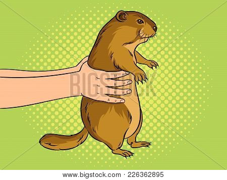 Groundhog Animal In Hands Pop Art Retro Vector Illustration. Marmot Predictor. Color Background. Com