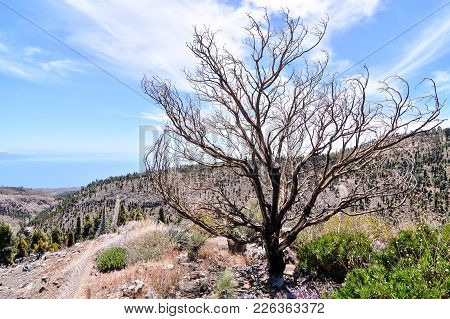 Desert Valley At Foot Of The Volcano Teide On Tenerife Canary Islands Spain