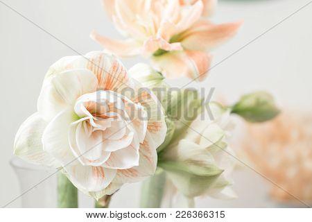 Flowers In Big Glass Vase. Beautiful Blossoms Of Amaryllis Flower. Wild Flowers - Hippeastrum. Vinta