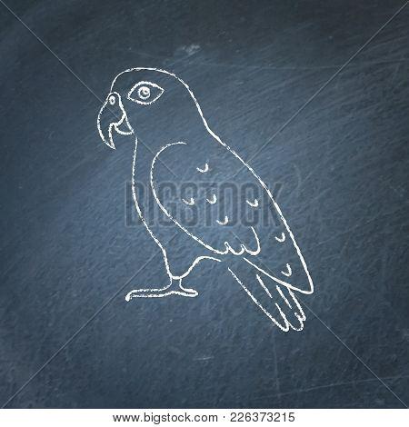 Pionus Parrot Icon Sketch On Chalkboard. Exotic Tropical Bird Symbol Drawing On Blackboard.