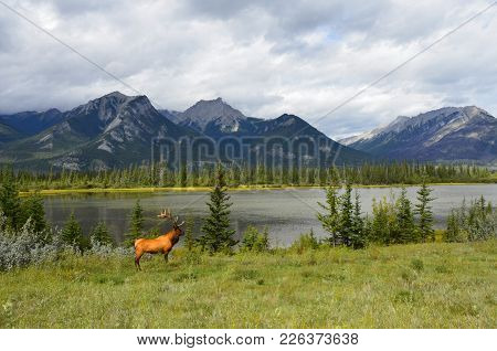 A Deer In The Canadian Wildlife Infront Of A Lake And A Mountain Landscape.