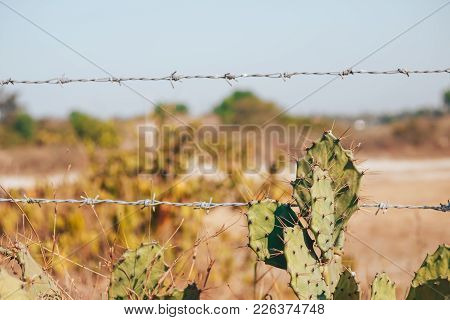 A Old Rustic Barb Wire Fence Next To A Desert Cactus. This Fence Represents Control And Force With M