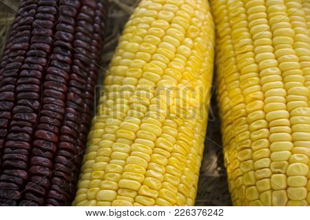 Waxy Corn And Sweet Corn From Agricultural Corn Plantation Farm At Countryside