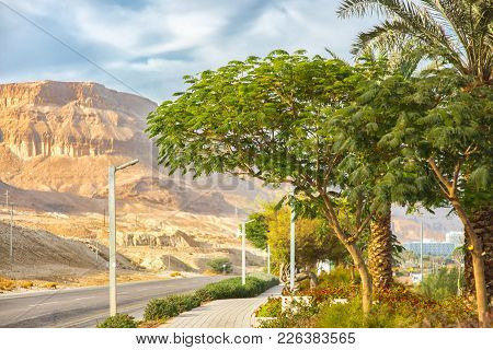 Road For Cars Near The Dead Sea, Palm Trees, Watering And Different Trees And Flowers