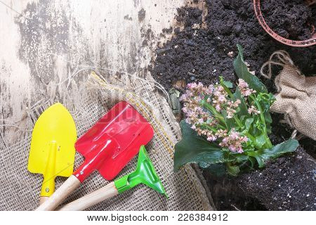 Gardening Tools With Flowers And Soil - Repotting Activity Concept With A Blooming Plant, Soil, Flow