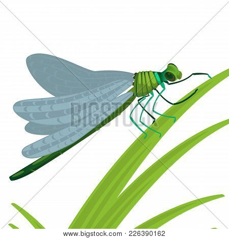 Dragonfly Insect With Big Eyes And Strong Transparent Wings And Elongated Body Sits On Green Grass V