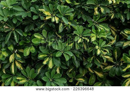 Green Leaves Texture, Foliage Backdrop. Nature Background, Plant Wallpaper, Fresh Floral Pattern