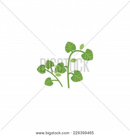 Vector Flat Style Hand Drawn Parsley Branch With Stem, Leaves Image. Isolated Illustration On A Whit