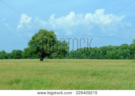 View In The Field, A Tree On It And Sky