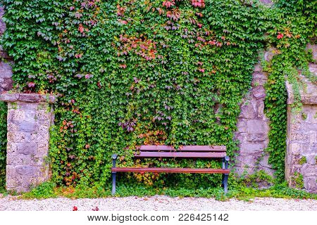 Wooden Bench Over The Green Leaves Wall
