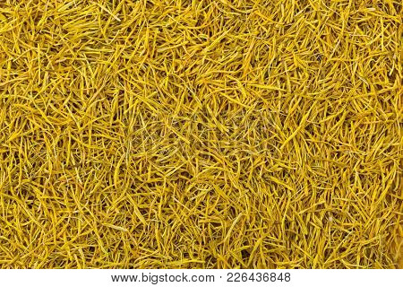 Closeup texture of dried Sacred Indian Lotus yellow stamen flower to make herbal tea (Nelumbo nucifera)