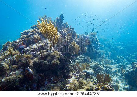Hard Coral, Brain Coral, Fire Coral And Soft Coral All Appears In This Underwater Landscape.