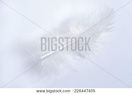 White Gentle Bird Feather Isolated On White Background. Light Key.