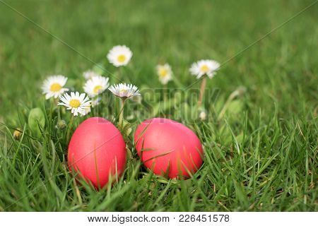 Two Easter Eggs In The Grass Infront Daizies