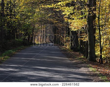 Road Drive In Desolate Forest Avenue Landscapes With Two Rows Of Trees Sides Near City Of Bielsko-bi
