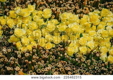 Rose Flowers With Yellow Petals And Bamboo On Natural Background. Valentines Day, Love, Romance Conc