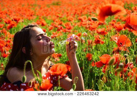 Poppy, Remembrance Day, Anzac Day. Summer, Spring, Poppy Flower. Opium Poppy, Youth, Freshness, Ecol