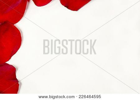 Red Rose Petals Frame On White Blank Space