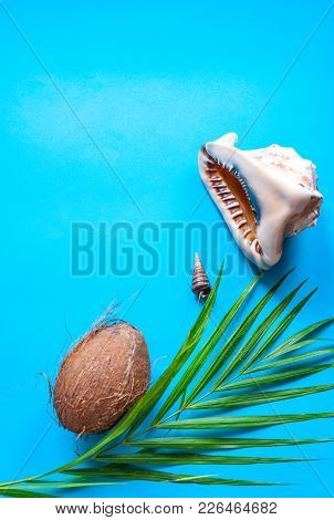 Tropical Paradise Concept: Big Tropical Sea Shell On A Turquoise Background With A Palm Tree Leaf. N