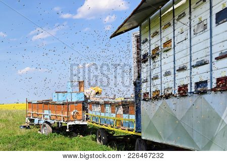 Beekeeper and his mobile beehives on trailer