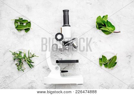 Analysing Food Concept. Healthy Products. Herbs Rosemary, Mint Near Microscope On Grey Background To