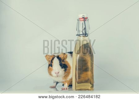 Red Little Guinea Pig In The Fridge Behind The Bottle