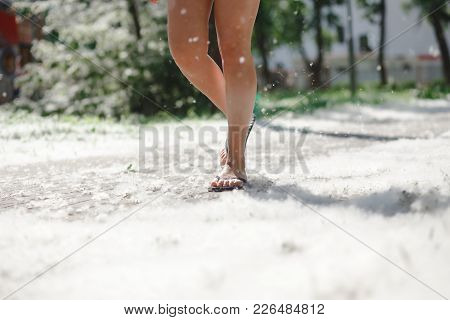 Female Feet On Grass Covered With Poplar Fluff. Poplar Blooming Season, Sunnyday In Park. Fire Risk