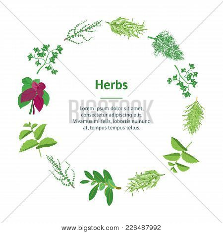 Natural Twig Herb Banner Card Circle Dill, Parsley, Basil, Mint, Rosemary, Tarragon, Laurel And Thym