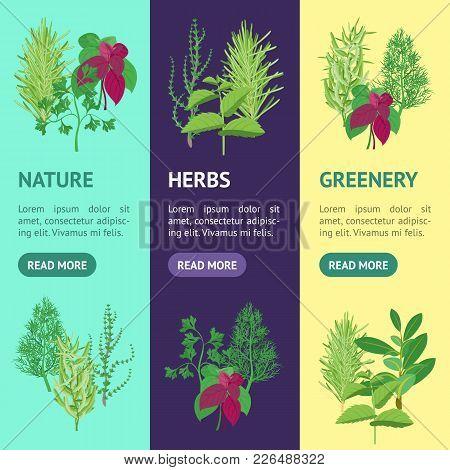 Natural Twig Herb Banner Vecrtical Set Dill, Parsley, Basil, Mint, Rosemary, Tarragon, Laurel And Th