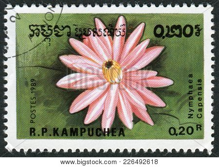 Kampuchea-circa 1989: A Stamp Printed In The Cambodia, Depicts A Flower Nymphaea Capensis (pink), Ci